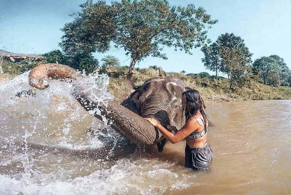 chiang mai elefante